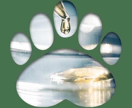 Badania laboratoryjne zwierząt